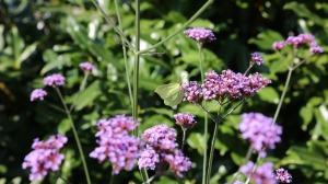 butterfly-1270739_1920