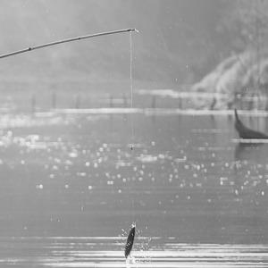 pesca-det