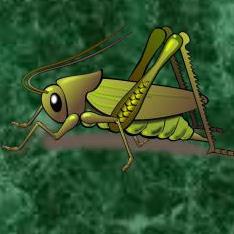 entomología para órbitacuad