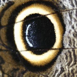 ojo mariposa cuad